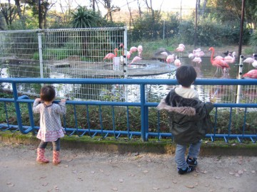 20091123_furamingo