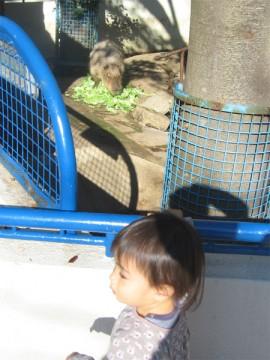 20091123_kapibara