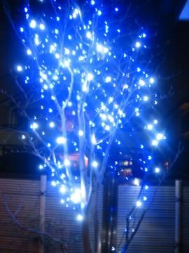 20091128_light