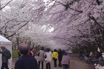 2011hirosaki03.JPG